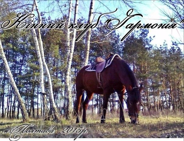 Eequestrian Harmony