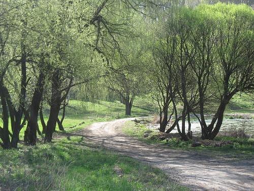 Poltava arboretum