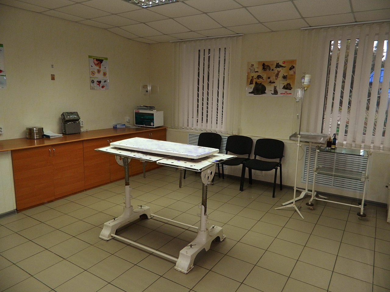 Clinic of Veterinary Medicine of Surgery and Obstetrics Department